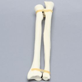 Ulna and Radius, 5.5mm Canal, Solid Foam
