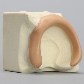 Acetabulum on Block with Labrum, Solid Foam, Left