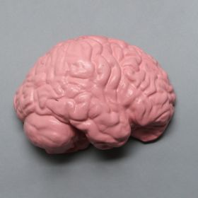 Half-Brain for Cranial Access Models