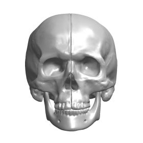 Skull with Mandible, Scan of #1344-46 and #1337-1